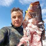 Salento: Squalo addenta una Cernia appena catturata da un Pescasub