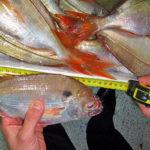 Le Misure Minime dei Pesci nella Pesca Sportiva e Ricreativa in Mare