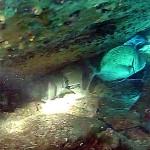 Video Pescasub con gli agonisti: Luigi Puretti e la Tana Mastra di Saragoni