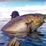 Video Pesca Sub: un Dentice da Record (13,173 kg)