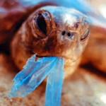 Ecco perché il Mare non si Salva con la Plastica Biodegradabile