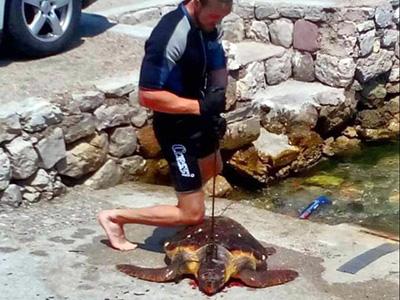 Pseudo Pescasub Infiocina e Cattura una Tartaruga Marina, poi Posta la Foto sul Web