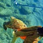 Video Pescasub: Un'altra Oppurtunità per la Tartaruga in Difficoltà