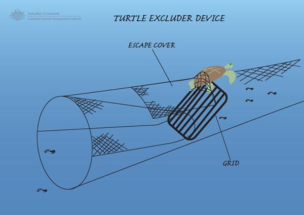 Schema del Turtle Excluder Device, il sistema che permette di evitare la cattura accidentale delle tartarughe marine durante la pesca a strascico