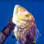 Video Pescasub: Stessa Tana, in 1 anno, 4 Cernie Bianche e 1 Grosso Dentice