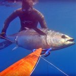 Video Pesca Sub: un Branco di Tonni Durante la Risalita (50 kg)