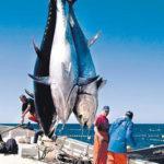 Pesca Tonno Rosso 2018/2020: Di Nuovo Beffa per gli Sportivo-Ricreativi