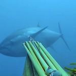 Quote tonno rosso 2014 per la pesca sportiva: è beffa