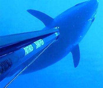 Tonno Rosso 2018: da Oggi STOP Anticipato alla Pesca Ricreativa