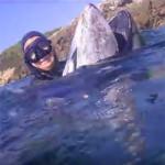 Video Pescasub: l'Enorme Tonno a Caccia di Polpi nel Bassofondo (320 kg)