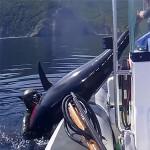 Video Pescasub: alla Ricerca del Grosso Tonno