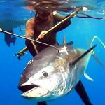 Pesca Tonno 2017: Tutto Quello che C'è da Sapere