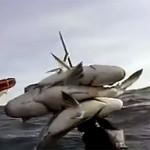 Video Pescasub: la Tripletta di Grossi Saraghi in Tana