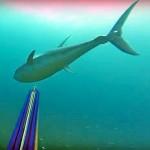 Video Pescasub: il Tonno Furioso Distrugge il Mulinello