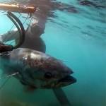 Video Pescasub: il Grande Tonno catturato con il 90