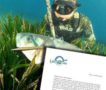 Licenza di Pesca in Mare a Pagamento: Spunta un Nuovo Questionario