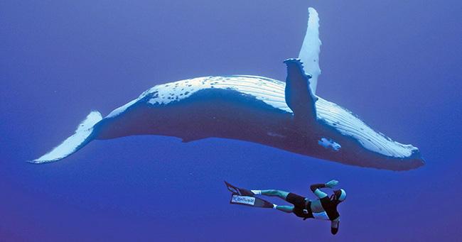 il diving reflex accomuna l'uomo e i cetacei