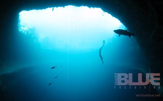 vertical-blue-freediving-3 copia